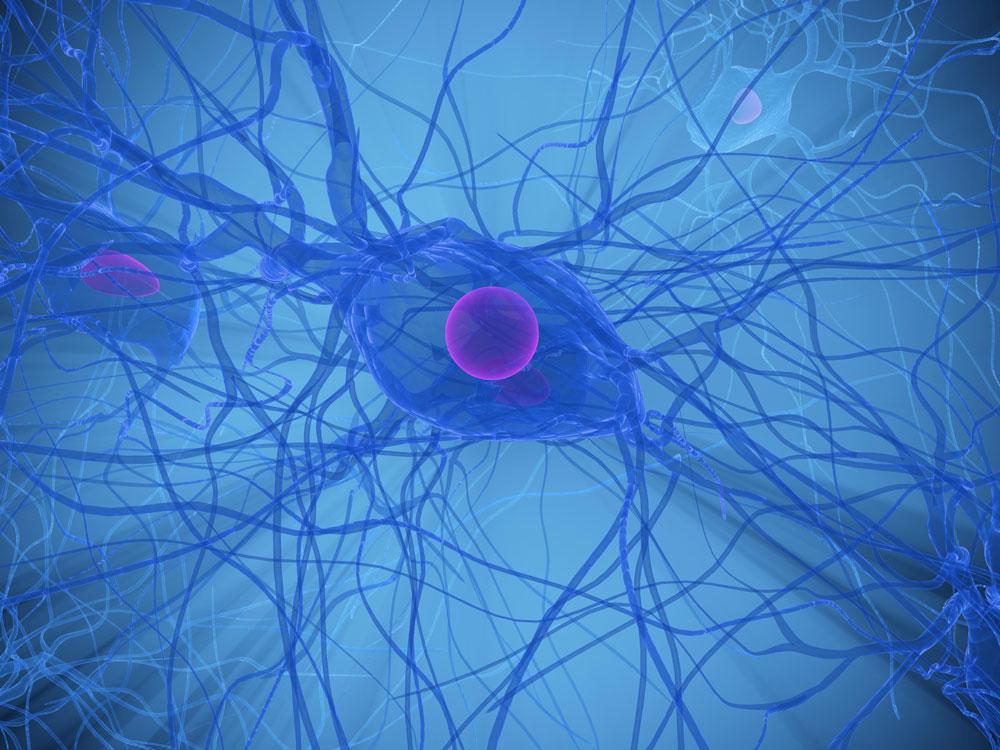 Microcefalia e sua relação com o Zika virus
